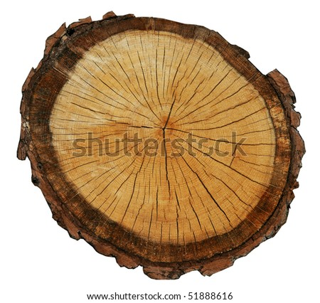 rough pine circle cut isolated on white background - stock photo