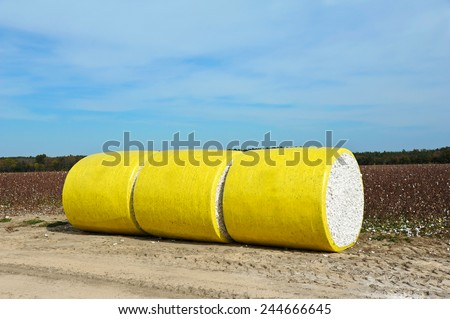 Round Bales of Harvested Cotton Wrapped in Yellow Plastic Sitting in the Field  - stock photo