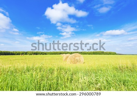 Round bales of hay in the field - stock photo