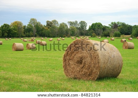round bales of straw in the meadow, Oxford, UK - stock photo