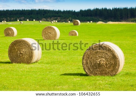 Round bay bale rolls in a green field - stock photo
