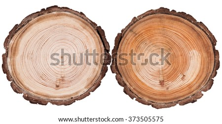 Round cut down tree with annual rings texture background - stock photo