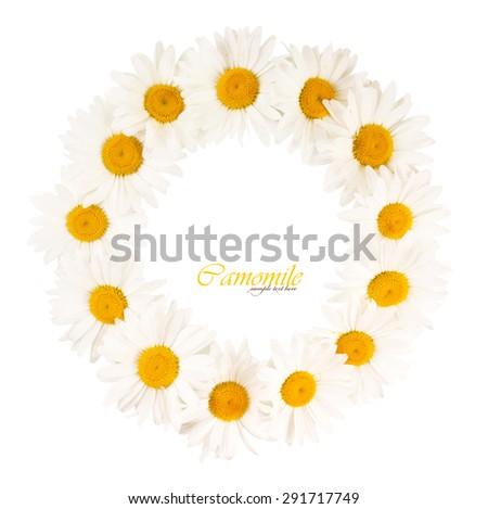 Round frame of white daisies - stock photo