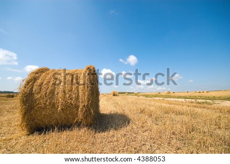 Round haystack in a field on background of the beautiful nature