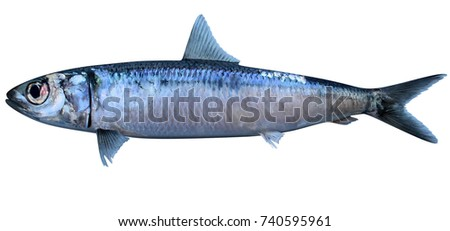 Round Herring 3D Illustration
