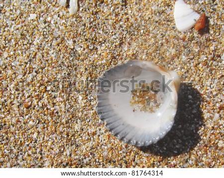 Round sea shell - stock photo