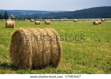 Round straw bales - stock photo