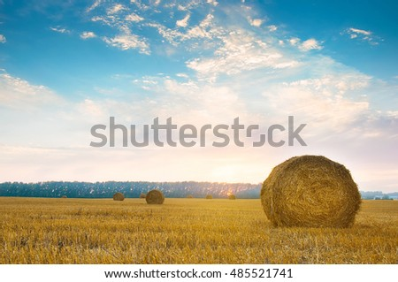 Round straw bales in russian fields on sunset and blue sky