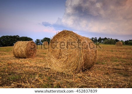 Round straw bales in Tuscany on sunset. June harvest. Italy.