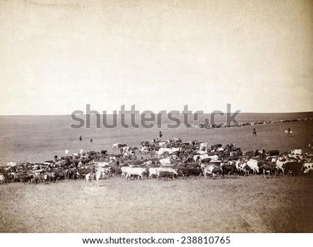 Round-up scenes on Belle Fourche, Dakota Territory. photo by John C. Grabill, 1887 - stock photo