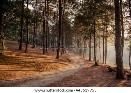 route and journey amidst the big tree and beautiful nature - stock photo