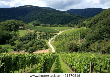 Route des vines in Alsace  France, vineyard. - stock photo