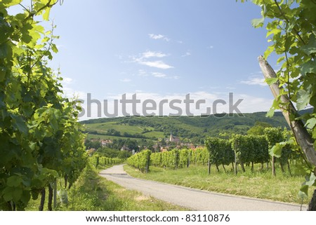 Route du vine, from Alsace. France - stock photo