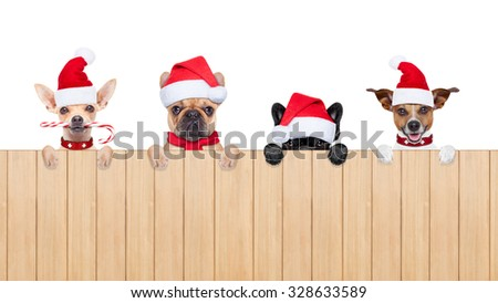 row and group of santa claus dogs, for christmas holidays, behind a wall, banner or placard, wearing a red hat  , isolated on white background - stock photo