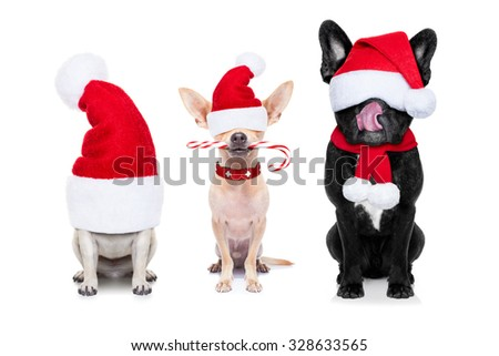 row and group of santa claus dogs, for christmas holidays, eyes covered by the hat , isolated on white background - stock photo