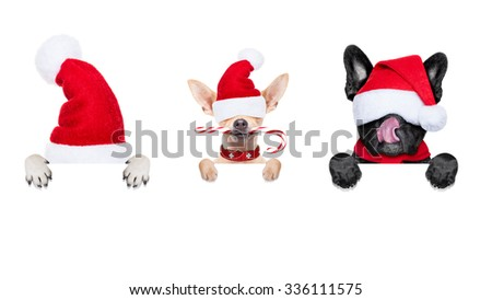 row and group of santa claus dumb dogs, for christmas holidays, behind a wall, banner or placard, eyes covered by the hat , isolated on white background - stock photo