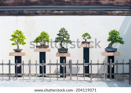 Row of bonsai - stock photo