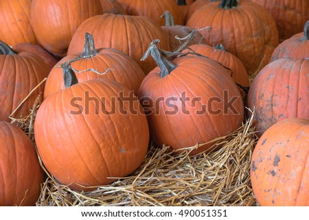 Row of carving pumpkin on straw for sale at local barn. Bright orange round Halloween pumpkins to carve into Jack-O-Lanterns. Background for fall, autumn, Halloween and Thanksgiving seasonal display.
