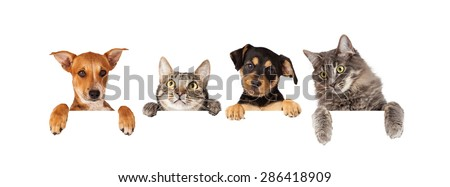 Row of cats and dogs hanging their paws over a white banner. Image sized to fit a popular social media timeline photo placeholder - stock photo