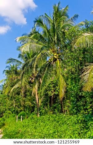 Row of coconut tree palms - stock photo