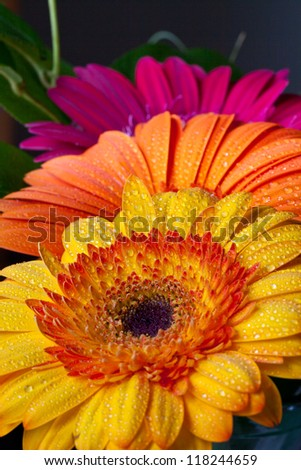 Row of Colorful Flowers - stock photo