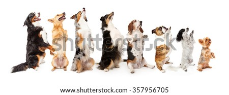 Sit up and beg stock images royalty free images vectors for Dog door size by breed