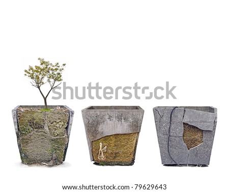 Row of exotic grungy damaged square concrete flower pot exposing the intricate root system, isolated against white. - stock photo
