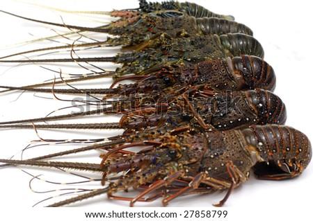 Row of freshly lobster - stock photo