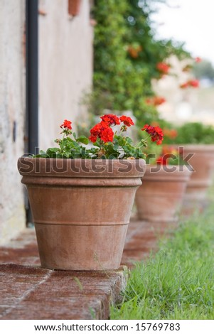 Row of geranium pots outside a Tuscan farmhouse - stock photo