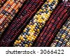 row of Indian corn on the diagonal - stock photo
