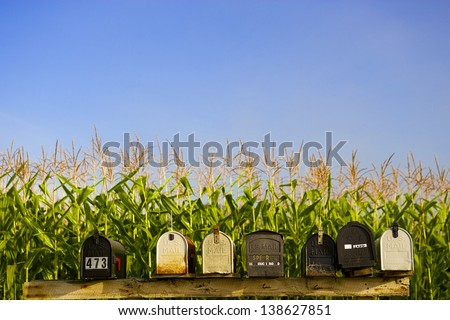 Row of mail boxes with a corn field in the background, Stowe Vermont, USA - stock photo