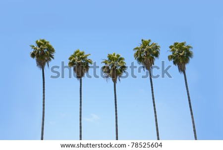 Row of many palm trees against a blue sky - stock photo