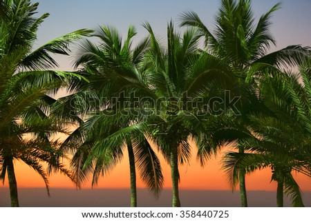 Row of palm trees under street lights with sunset sky and horizon line on the sea in the background, Pattaya beach, Thailand. - stock photo