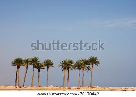 Row of palmtrees - stock photo
