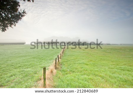 Row of poles leading to trees in the mist - stock photo