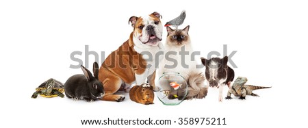Row of popular domestic pets together over white  - stock photo