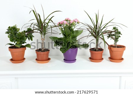 Row of pots with different flowers on white shelf in living room