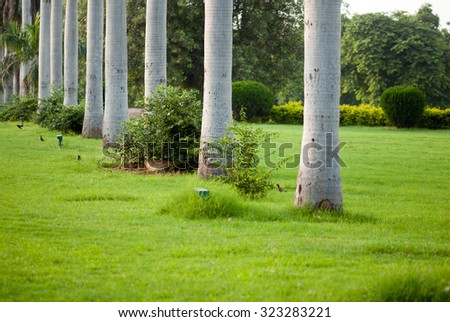 Row of Queen Palm trees and green grass at Purana Qila or Old Fort New Delhi, India, South East Asia - stock photo