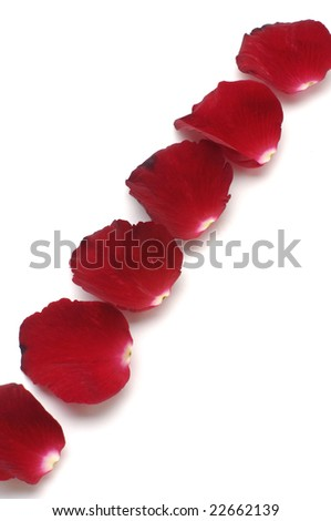 Row of red petals on white