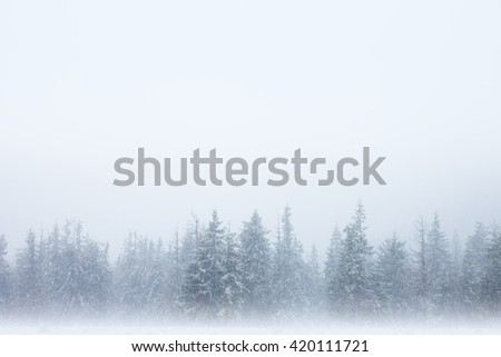 Row of snow-covered trees with winter sky above and mystical fog below - stock photo