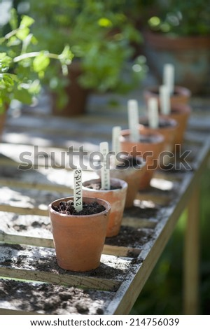 Row of terracotta flowerpots with labels of savings in greenhouse - stock photo