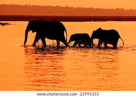 Row of three elephants in the lake, Africa - stock photo