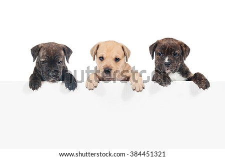 Row of three puppies hanging their paws over a white banner