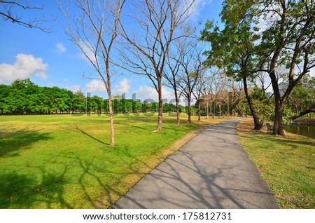 Row of Tree in Park - stock photo