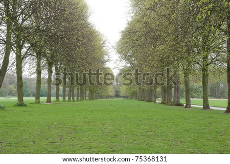Row of Trees - stock photo