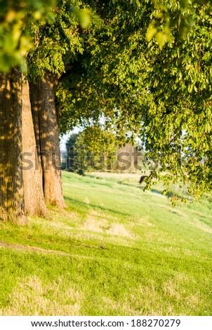 row of trees along Dutch dike - stock photo