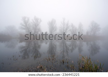 Row of trees along water in the mist - stock photo