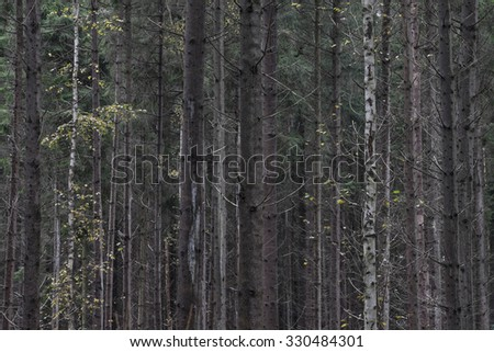 Row of trees in forest - stock photo