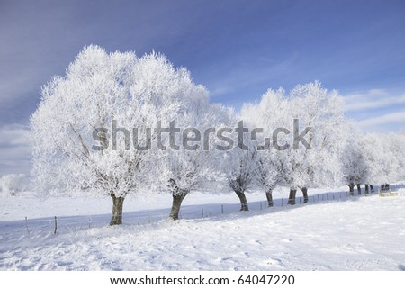 Row of trees in frost and landscape in snow against blue sky. Winter scene. - stock photo