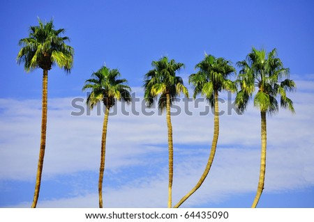 Row Palm Trees against petty blue sky - stock photo